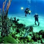 LOMBOK Akan segera Memiliki Taman Satwa Bawah Laut
