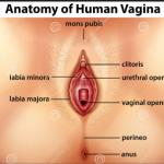 Kata Dokter: Sering Pipis Malam dan Nyeri dibagian Bibir Vagina