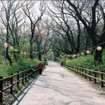 Melihat Pemandangan Indah Seprti Pohon dan Bunga Dijalanan Bisa Bikin Bahagia